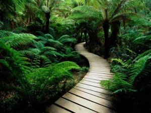 choice-new-zealand-nature