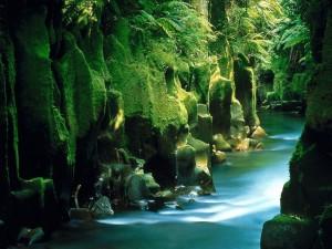 New_Zealand_Nature_1920x1440_HD_Wallpapers_Pack_2-8.jpg_Te_Whaiti-Nui-A-Toi_Canyon_Whirinaki_Forest_North_Island_New_Zealand